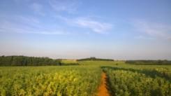 horley walk