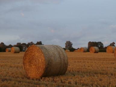 Meadowsweet Farm Harvest 1