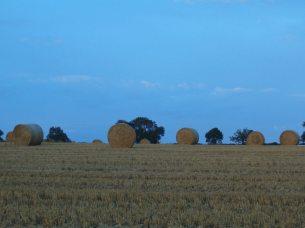 Meadowsweet Farm Harvest